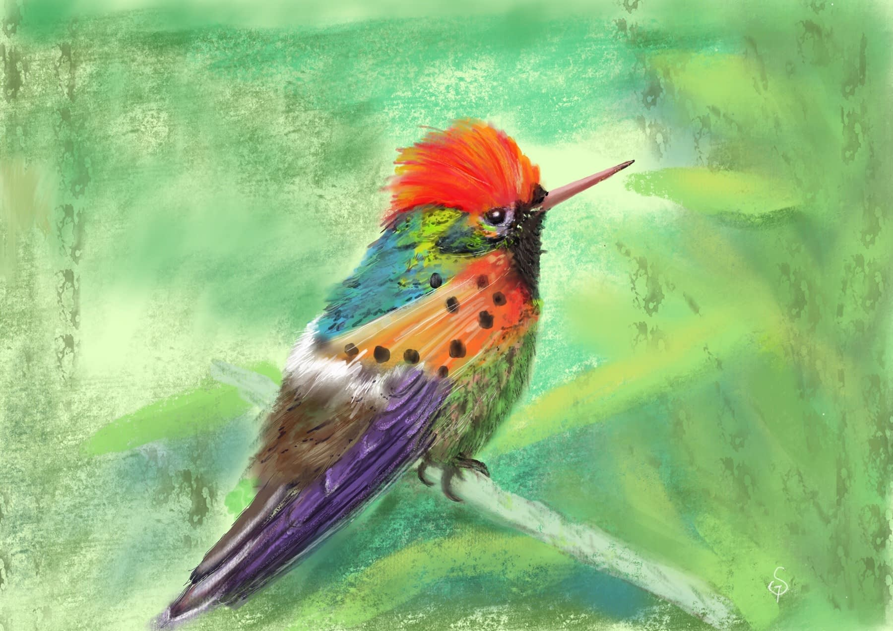 Humming bird - digital