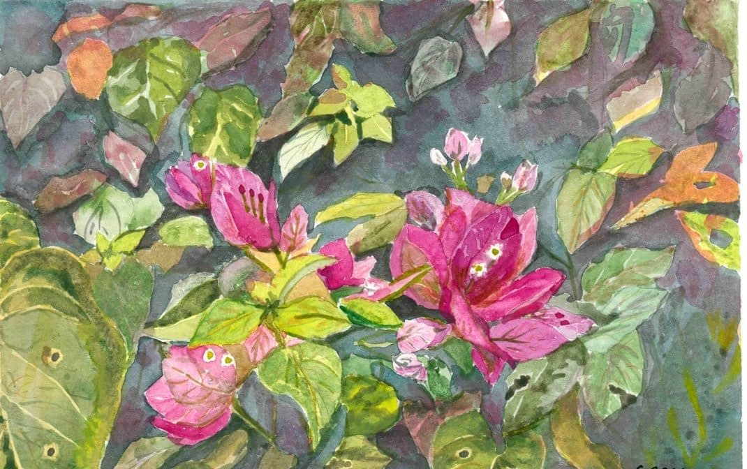 Bougenvillea - water colours